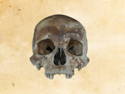 Carpenter Skull